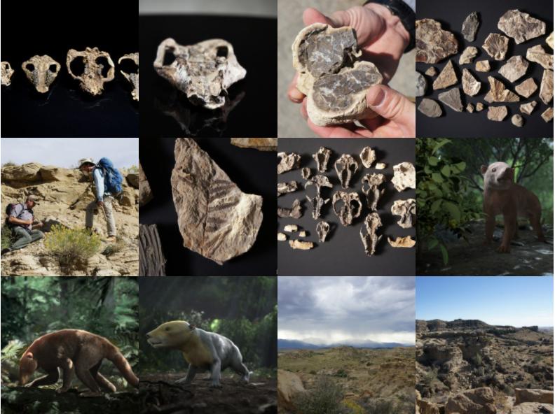 Coral Bluffs fossils