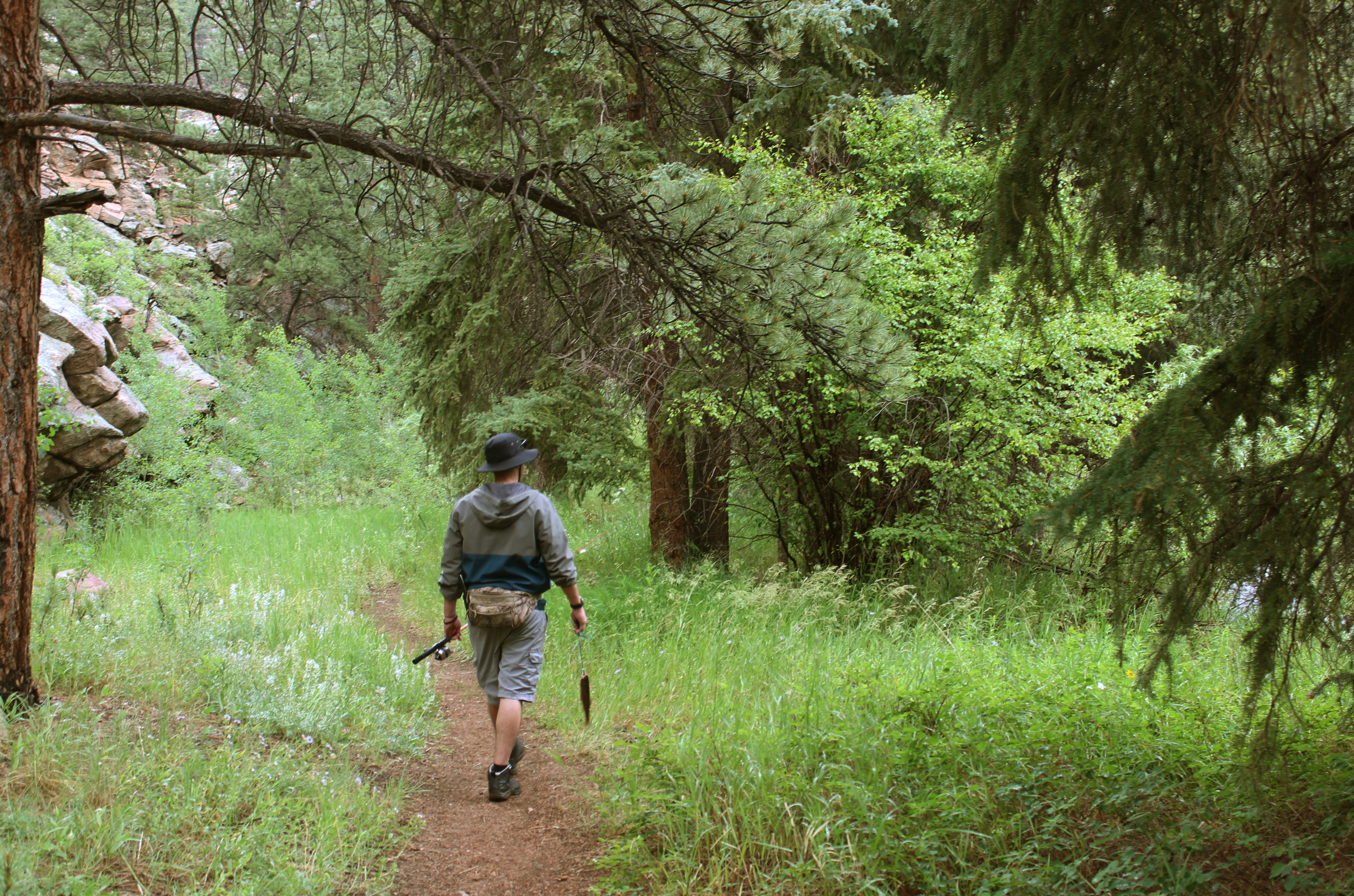 person hiking on a wooded trail