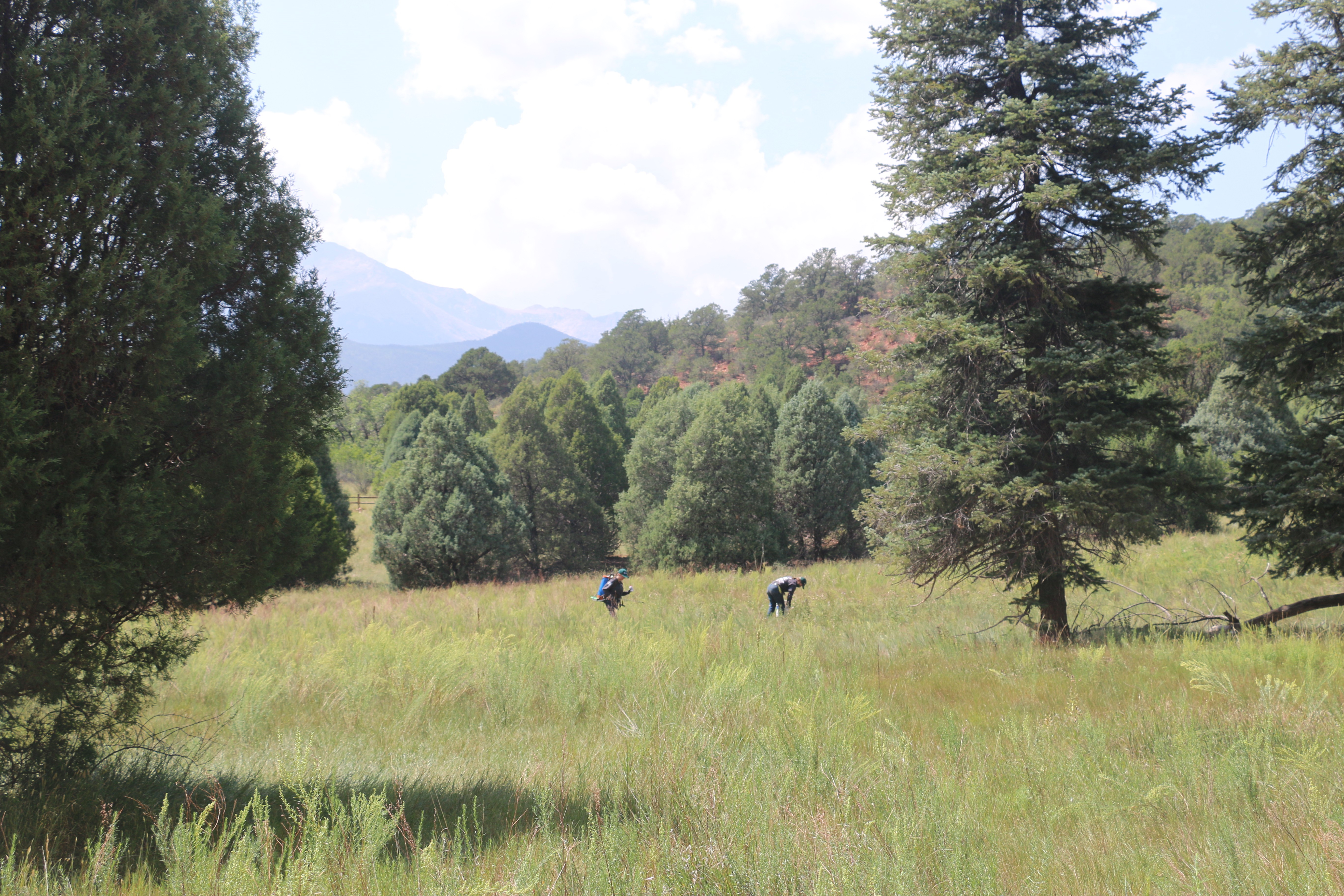 two people in the distance bending over to pull weeds in a large meadow.