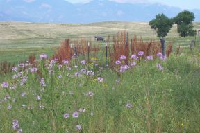 Bluestem Prarie Open Space