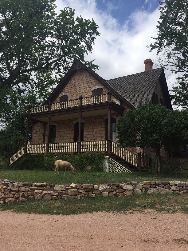 Sheep standing in front of a home