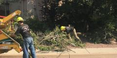 Wildfire mitigation chipping crew putting branches in chipper