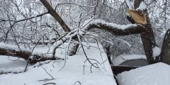 broken tree limb