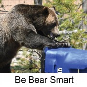 Bear trying to get into a homeowner's trash can. Be bear smart. City and Colorado Parks and Wildlife logos.