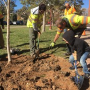 small boy helps city foresters plant a tree