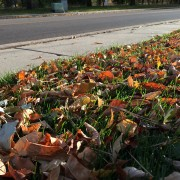 fall leaves on the ground. sidewalk and street in the background.