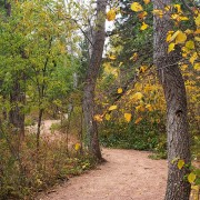 trail through forest during fall