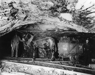 man stands next to a burro pulling a cart full of coal in a mine. The shaft is small, just tall enough for the man to stand in.