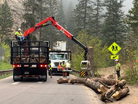 heavy logging equipment to remove felled trees