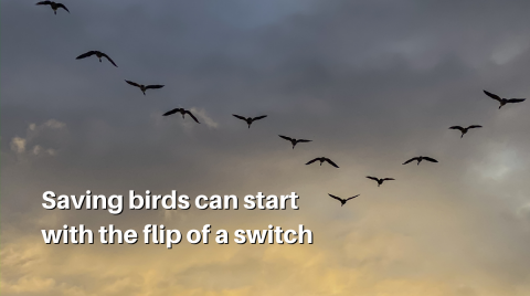 """migrating birds flying in a """"v"""" formation in a cloudy sky as the sun sets. """"Saving birds can start with the flip of a switch."""""""