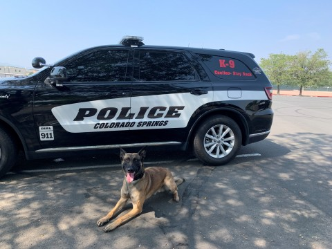 K9 Rocco in front of a CSPD vehicle
