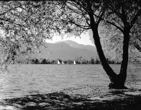Black and white historic photo. a tree frames the right side with branches framing the top of the photo. Three sailboats appear small on the far side of the lake. Pikes Peak in the background.
