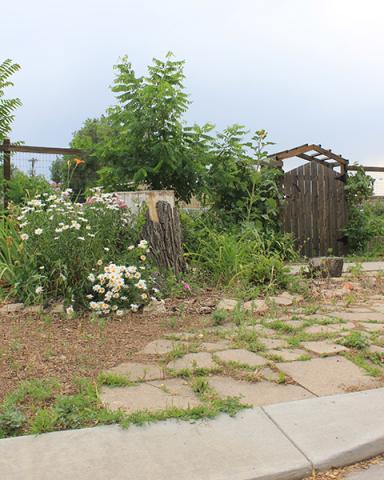 Overgrown community garden