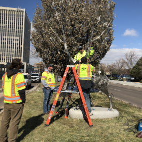 artist and workers installing the deer on a median in downtown colorado springs