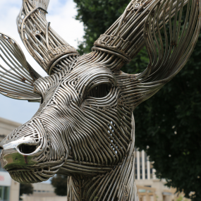 closeup of the deer's face