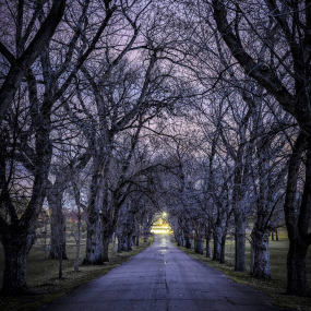 straight road going into the distance. It is lines with large trees on both sides. The trees have no leaves. The road is dark and moody under the trees but there is warm, bring light at the end of the road in the distance. Photo by IG @last.light.images