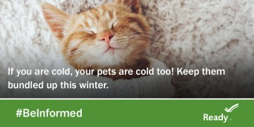 kitten graphic: keep pets bundled up