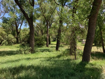 trees and tall grasses
