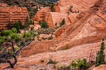 Red Rocks Canyon
